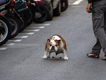 Hund Kot Hintergrund Bild