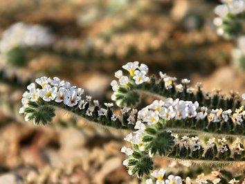Pflanzen Hintergrund Bild