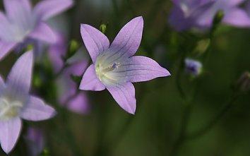 Gruen lila Desktop Hintergrund