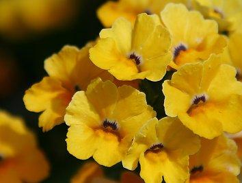 Blumen Desktop Hintergrund