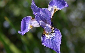 Blumen Hintergrund Bild