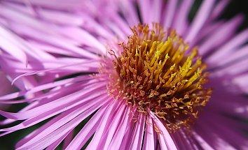 Pollen Backdrop