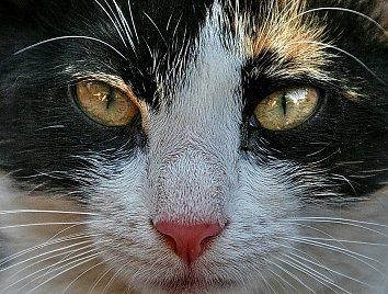 Gesicht Desktop Hintergrundbild