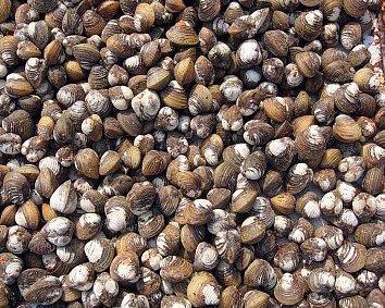 Muscheln Markt Hintergrund