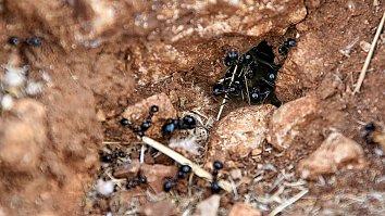 Ameisen Arbeiterinnen Wallpaper Bild