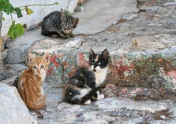 Babies Katzen Bildschirmhintergrund