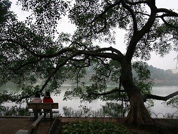 Baum See Hintergrund Pic