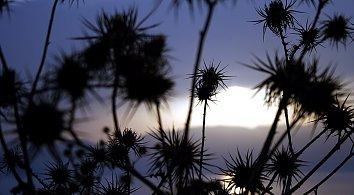 Abendstimmung Background Pic