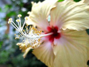 Bluete Thailand Desktop Hintergrundbild