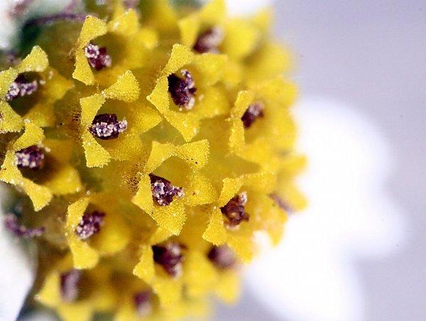 768 624 kb jpeg bilder von wildblumen blumen blume wilde blumen aus