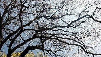 Baum Desktop Wallpaper