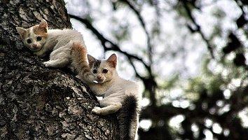 Baum Katzen Wallpaper Bild