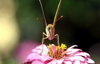 Insekten Backdrop