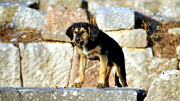 Ruinen wallpaper tiere wallpaper beige braun hintergrundbilder hunde