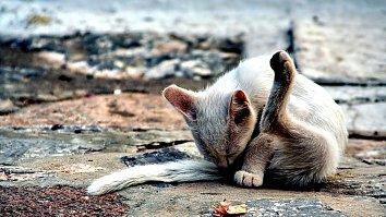 Katze Pfoten Bildschirmhintergrund