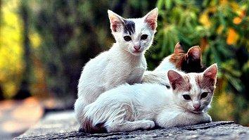 Katzen Babies Hintergrund Bild