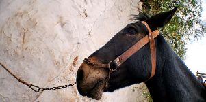 Fotos von Pferden als