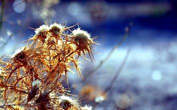 Pflanzen Hintergrundbild