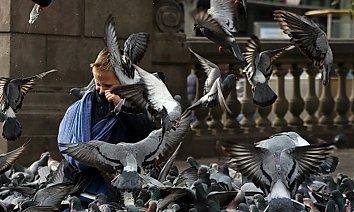 Kind Tauben Bildschirm Hintergrund