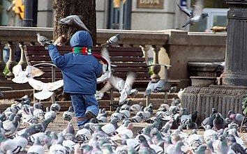 Tauben Desktop Hintergrundbild