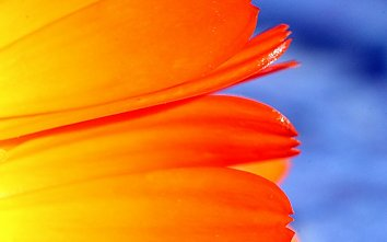 Tulpe Wallpaper Bild