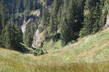 Bergwald Bildschirmhintergrund