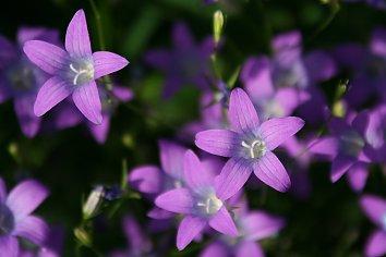 Blumen Hintergrund Pic