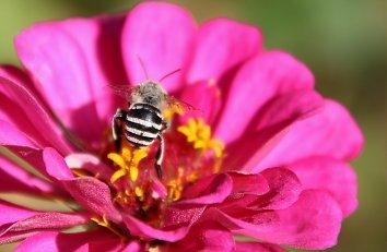 Bienen Wallpaper