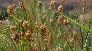 Gras Hintergrundbild