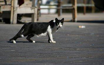 Katze Hintergrund Pic