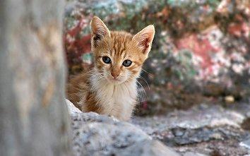 Katze Hintergrund