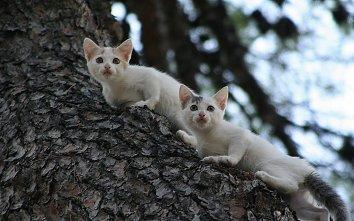 Katzen Baum Wallpaper