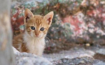 Katzen Hintergrund Bild