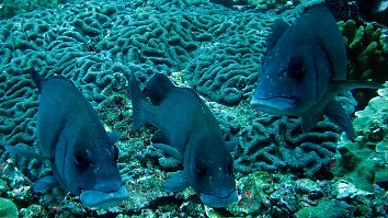 Korallen Fische Desktop Hintergrundbild