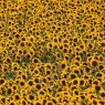 Sonnenblumen-Iphone-5-Wallpaper