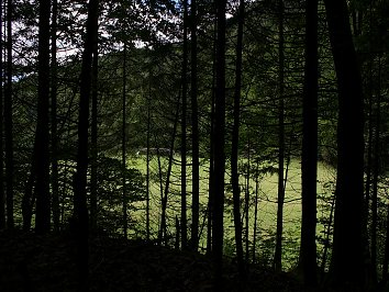 Lichtung Hintergrund Pic