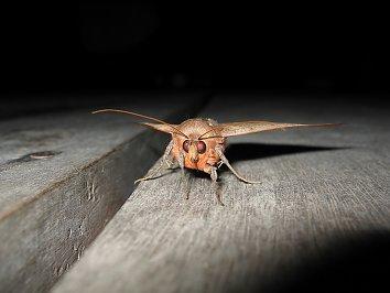 Holzbalken Insekt esktopmotiv