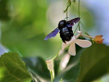 Insekten Desktop Hintergrund