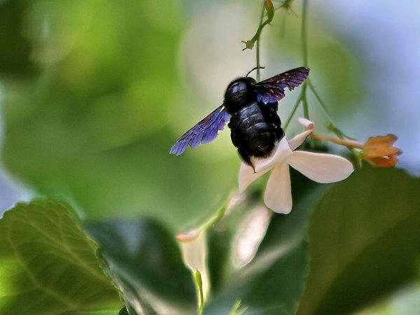 Insekten desktop hintergrund download