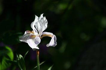 Pflanzen Background Pic